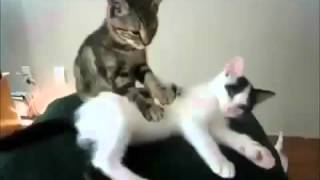 Коты и кошки: Массаж котенка