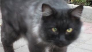 Кот и жареная рыбка.Покормил бездомного кота.