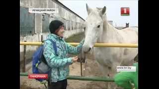 Лошади-чемпионы могут оказаться на мясокомбинате
