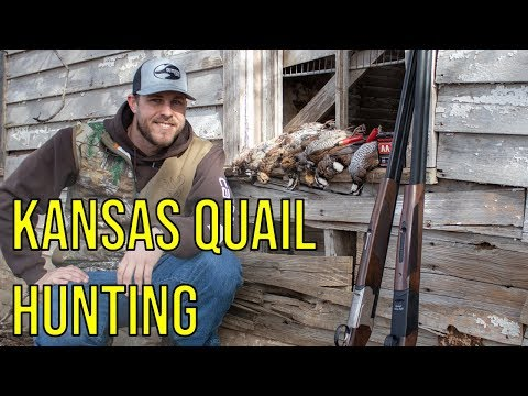 I Went Quail Hunting