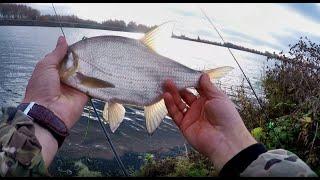 Рыбалка на фидер в октябре