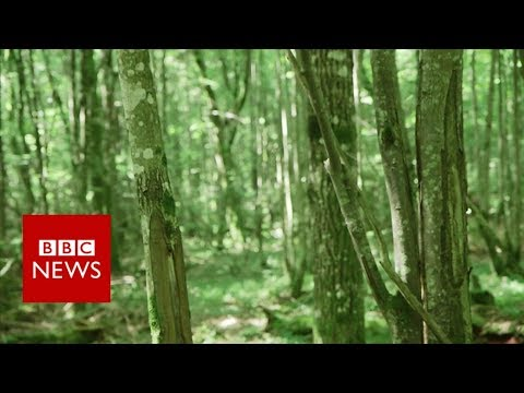 Will Europe's last fairy tale forest …