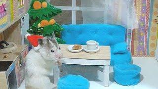 ХОМЯКИ играют В ПРЯТКИ в доме для кукол. Hamsters play hide and seek