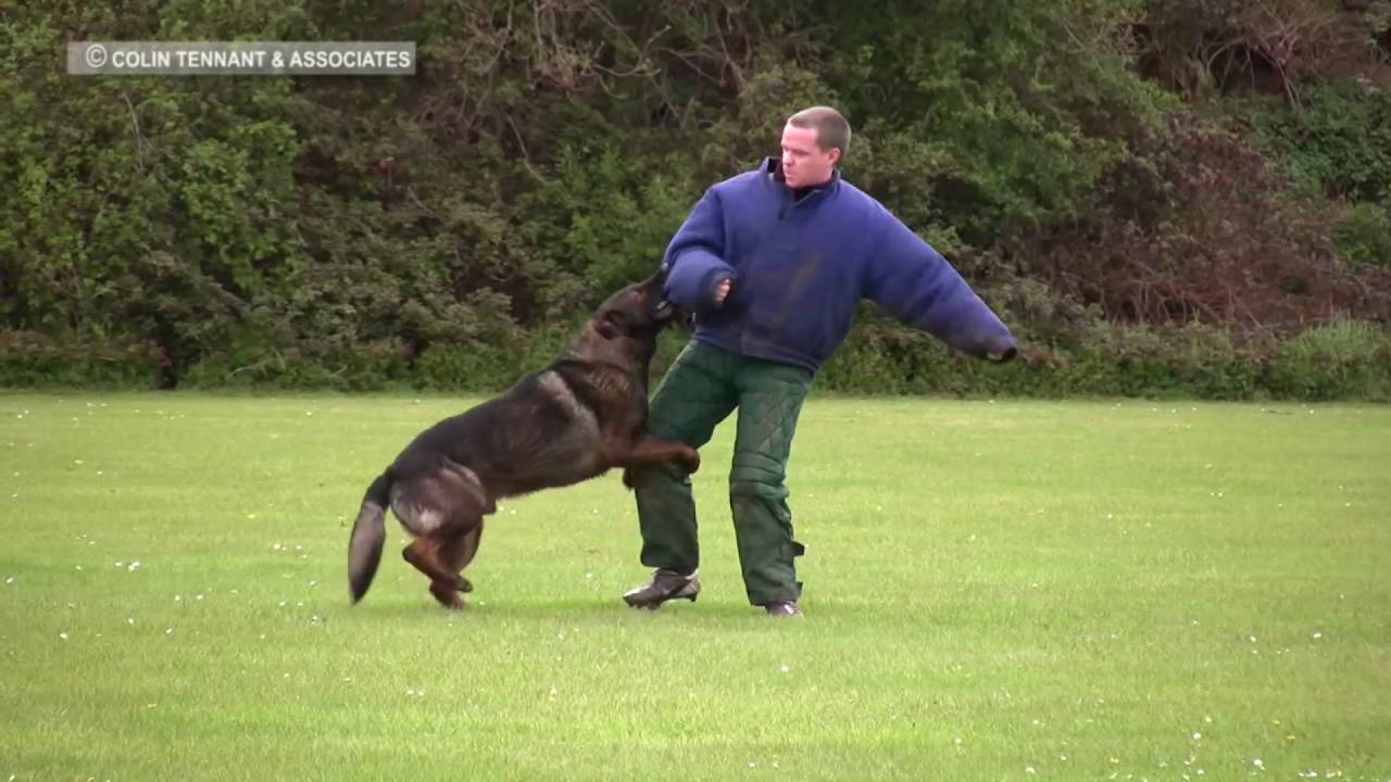 Police Dog Training Criminal Work, Agilty Youtube