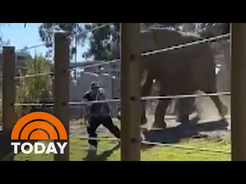 Father-Arrested-After-Bringing-Son-Into-Elephant-Enclosure-TODAY