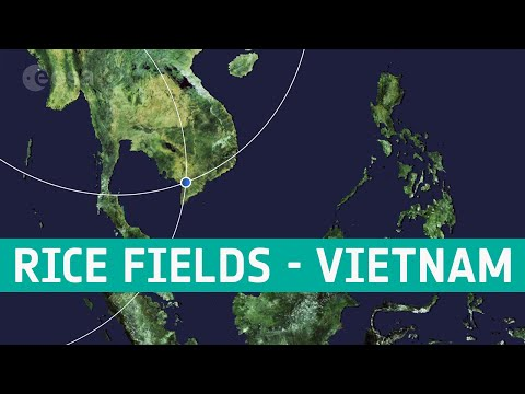 Earth from Space: Rice fields, Vietnam