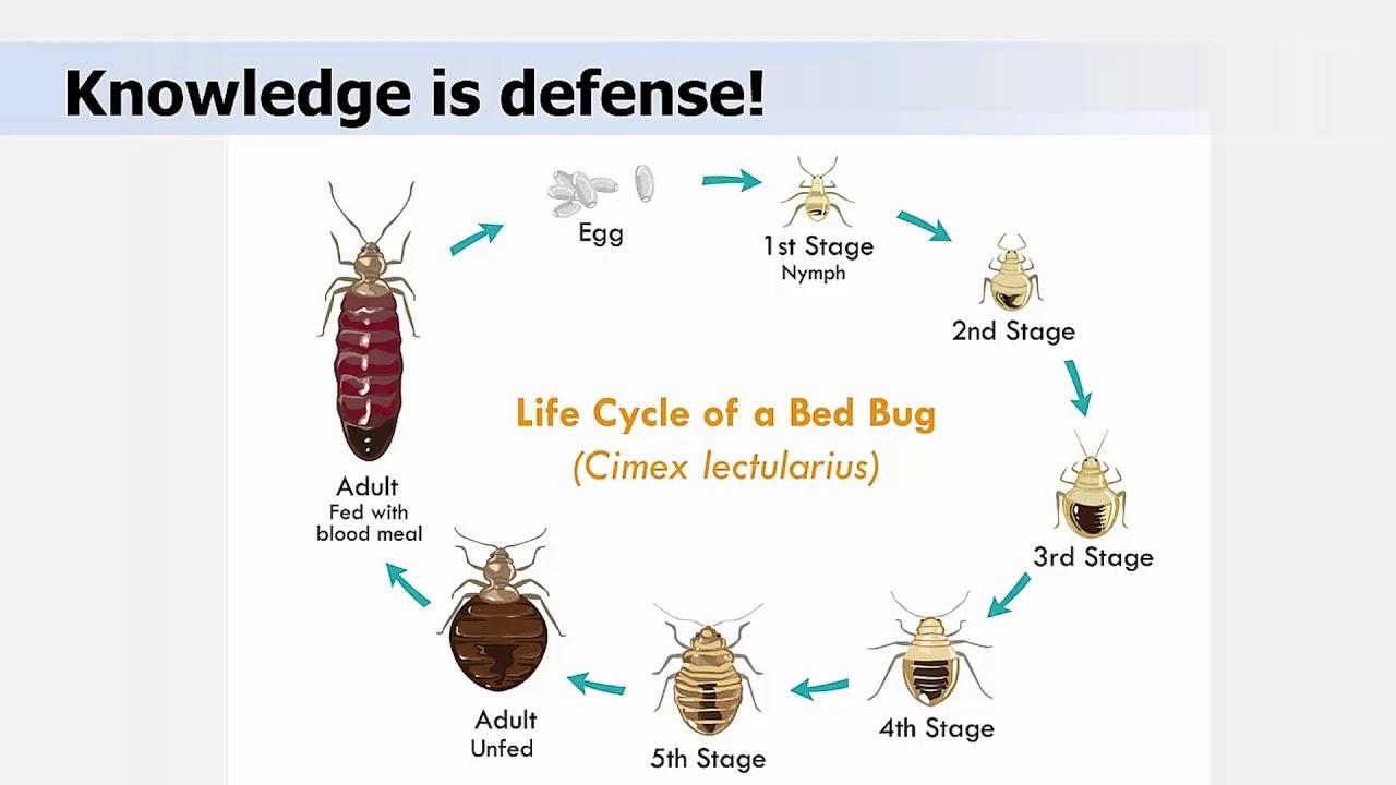 Bed Bug Biology And Behavior