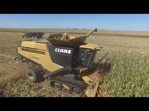 Lexion Wet Corn Demos September