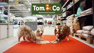 DEMO DOG DANCING  Aiko & Owen || Tom & Co Hautmont
