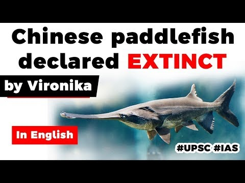 Yangtze River's Paddlefish declared extinct, Know facts about one of world's largest freshwater fish