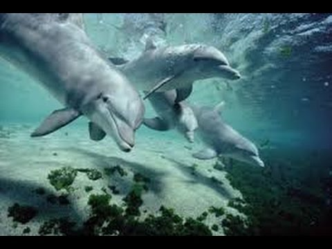 The sweetest creation of the underwater world Documentary film 2017 hd