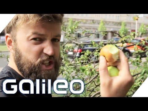 Mundraub: Obst und Gemüse kostenlos aus dem Internet | Galileo Lunch Break