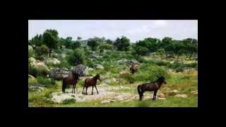 MIGUEL ACEVES MEJIA ****  CABALLO LOBO GATEADO - (El Potro...)
