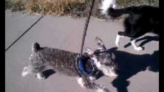 Denver Dog Joggers - Running With Lester
