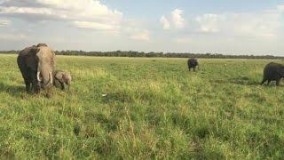 Visiting the Masai Mara National Reserve