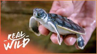 Sea Babies Splashing Around   Baby Animals In Our World   Real Wild