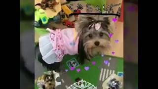 Фотографии моей собачки♡♡♡