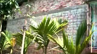 Bangali boudi