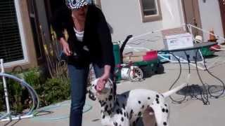 Devon's Dog Trick Training - Spin Circles