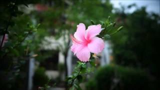 A Farewell In The Evening Rain [Sony NEX-5N]