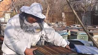 Весеннее развитие у пчел, схематично как развивать семью | уроки пчеловодства