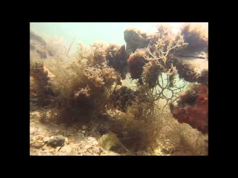 Indian River Lagoon Diving