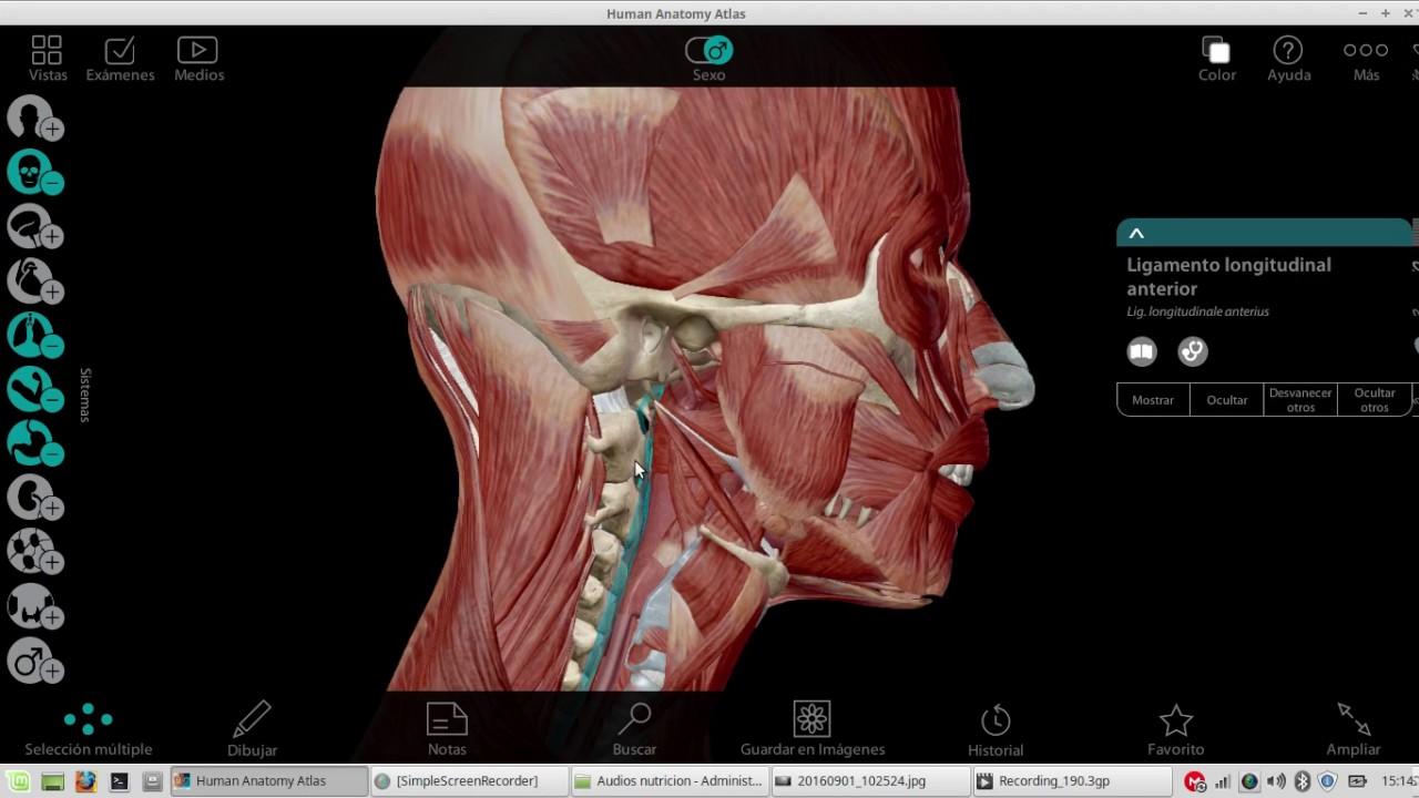 Anatomia Aparato Digestivo - Cavidade Bucal Faringe (repasso) - YouTube