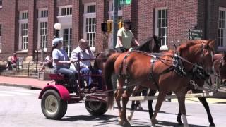 Horse Parade in Downtown Waynesville NC!