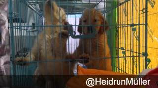 Pet Store Xiamen - Zoogeschäft Xiamen, China