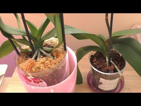 Корни орхидей УБЕГАЮЩИЕ! / Паста от стволовой гнили.