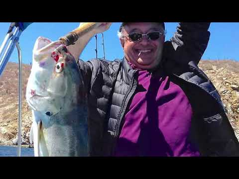 MEXICAN MINUTE LA PAZ FISHING REPORT From Tailhunter Sportfishing For Dec. 15-29, 2019