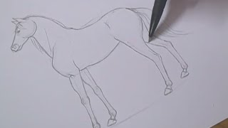 Tutorial - Como desenhar cavalos / How to draw horses