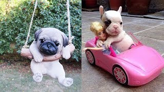 TRY NOT TO AWW ♥ The Cutest Animals Can Only Be PUPPIES ♥ Funny Babies And Pets