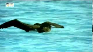 Geheimnisvolle Tigerhaie   Spurensuche im Ozean Dokumentation über Tigerhaie Teil 1