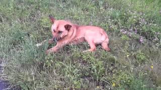 собака в лесу...через минуту приехали хозяева)) 2 суток искали)