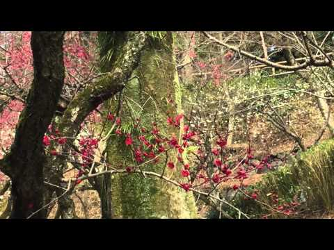 Romantic Area Kyoto 京の都ぶらぶら放浪記:「京の春を探して」北野天満宮(京都府京都市上京区御前通今出川上る馬喰町)