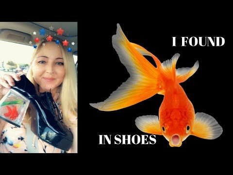 Goldfish In Shoes?!!!