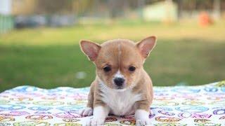 Что нужно для появление щенка в доме?