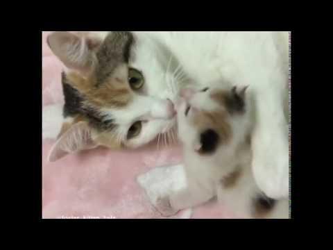 Rescue Cat Mama and Her Precious Mini-me Baby Kitten