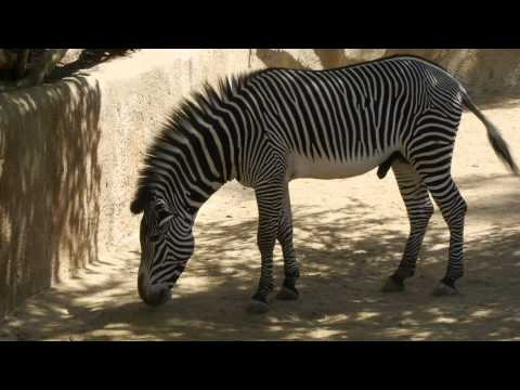 Los Angeles Zoo trip - April 28