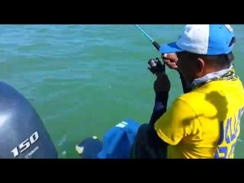 Ikan kurau Laut Rompin, berjaya ditewaskan