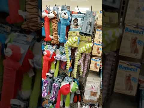 Dollar Tree Cat Supply Haul 2019