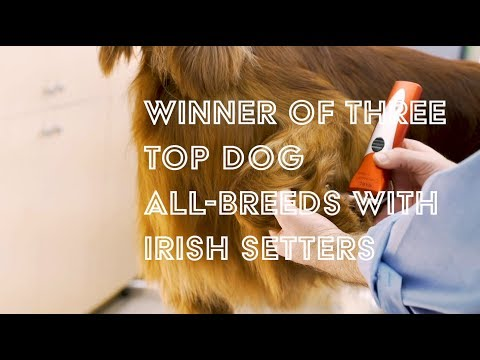 The Irish Setter Trim with Will Alexander: Available Now!
