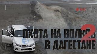 Охота на волка в Дагестане
