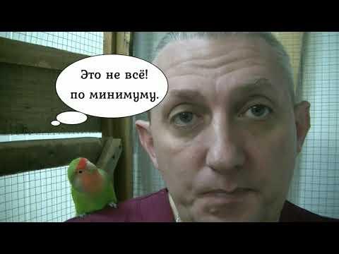 Правильное кормление волнистых попугаев.  Часть 3-я.  Витамины, овощи, фрукты и зелень.