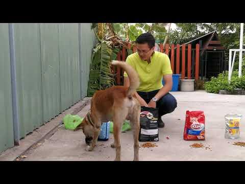 อาหารสุนัขยี่ห้ออะไรที่สุนัขผมชอบที่สุด ทดสอบ 5 ยี่ห้อ เฉพาะหมาของผมหมาตัวอื่นอาจชอบไม่เหมือนกัน