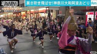 神奈川大和阿波おどり 大人も子供も踊れ踊れ!(17/07/30) thumbnail