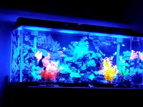 Glofish Tank 55 gallon glofi...