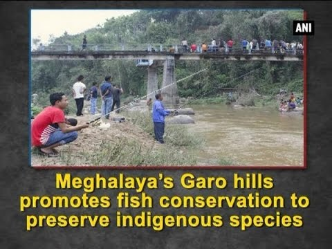 Meghalaya's Garo hills promotes fish conservation to preserve indigenous species - ANI #News
