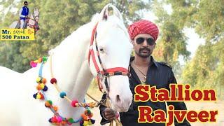 Stallion Rajveer Mr. कनबी 🐎 500 Patan Mitul Patel Horse Lover